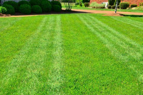 Fresh Grass Laying in Berkshire