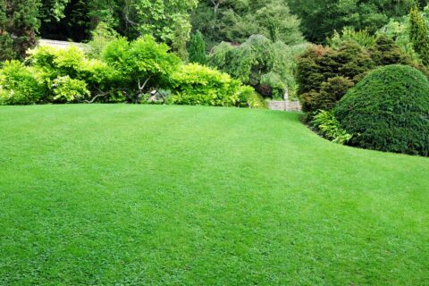 Quality Lawn Turfing Berkshire